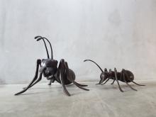 Bronze Ant