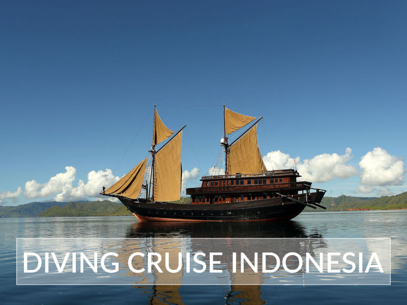 Diving Cruise Indonesia